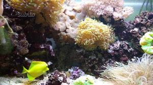 Pesci, coralli e rocce da acquario marino