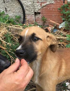 Pino, cucciolo 3 mesi coccolone