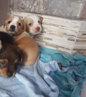Regalo cuccioli NON di razza
