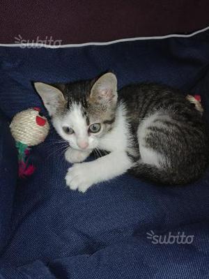 Regalo gattina/gattino/gattini /gatto/gatti/gatta