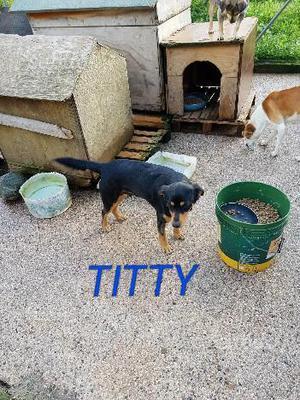Titty: 1 anno e mezzo, taglia medio piccola