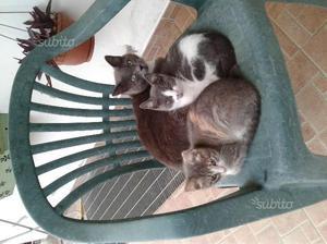 2 gattini