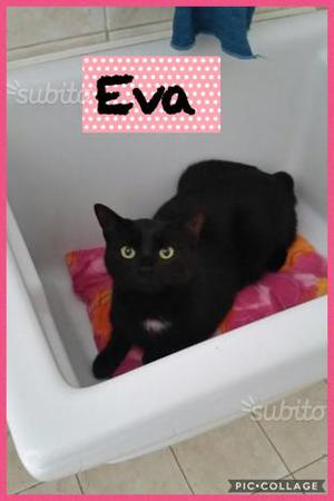 Eva, splendida gatta di 2 anni