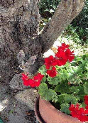 Gattini di due mesi in regalo