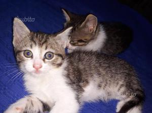 Regalo 2 gattini femmine