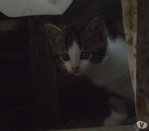 gatti di 2 mesi in adozione
