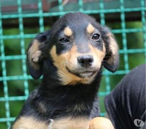 Abric, cucciolino buono e affettuoso!