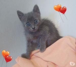 Regalo tre dolcissimi gattini