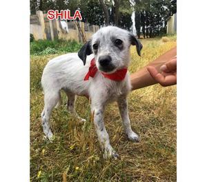 SHILA, SPINONCINA 3 MESI TAGLIA PICCOLA