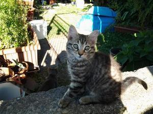 Gattini di 2 mesi
