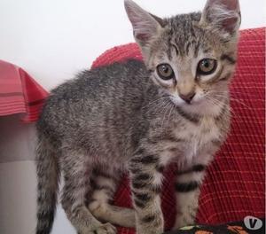 Regalo dolcissima gattina tigrata