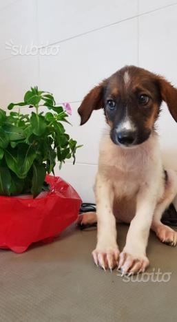 Athena, cucciolo f dolce affettuosa un po timida