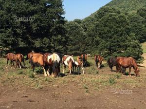 Cavalli e puledri di varie razze