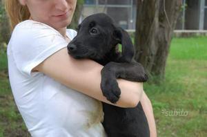Grut cucciolo tre mesi mix beagle