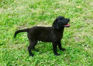 Pepe cucciolo 3 mesi