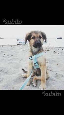 Totò, cucciolo di 3 mesi in adozione