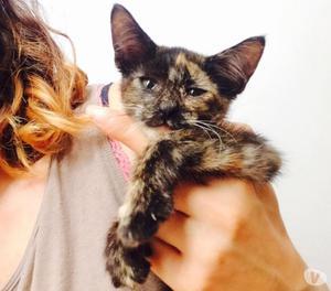 Gattina di 3 mesi in regalo