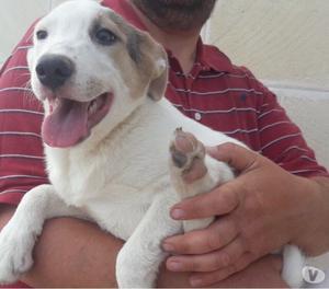 Splendida cucciola di 5 mesi e 12 in adozione