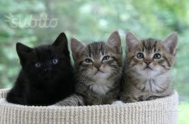 Adozione del cuore per gattini di due mesi