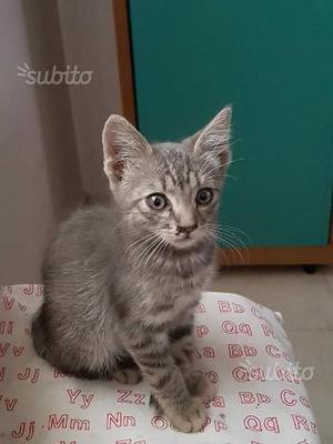 LUIGINA - gattina di circa 2 mesi