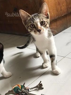 RUDYNA - gattina di 3 mesi