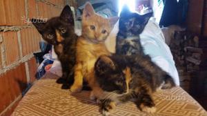 Regalo gattini come da foto