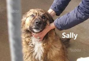 SALLY- simil Pastore del Caucaso