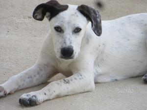 Dolcissima cucciola di 4 mesi in adozione