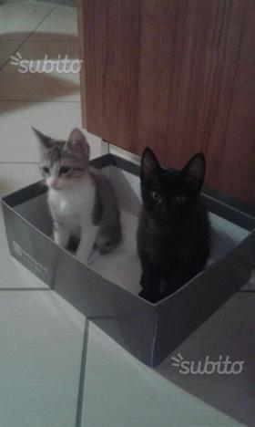 Dono gattini di 3 mesi