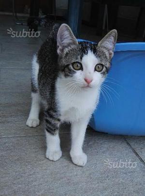 Regalo gattino