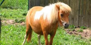 Sto trovando pony femmina