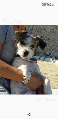 cagnolina di due anni,piccola (5kg circa)