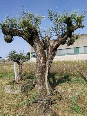 Solo piante comune nascosto posot class for Solo piante