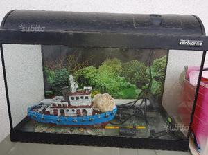 Acquario e filtro per pesci posot class for Neon pesci prezzo