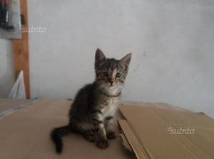 Gattina di circa 3 mesi