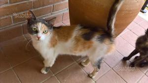 Gattina sterilizzata