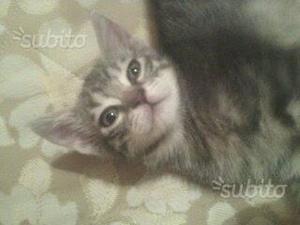 Gattino 3 mesi