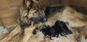 Regalo cuccioli appena nati