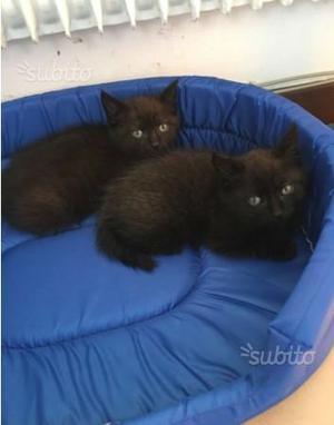 Regalo gattini anche separatamente