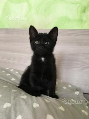Regalo gattino nero