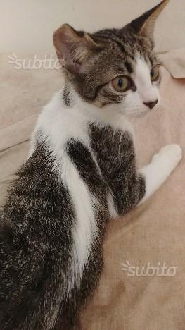 Regalo gatto di 3 mesi