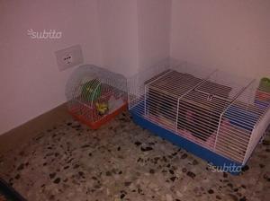 Regalo rato completa di gabbia