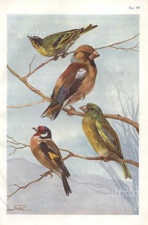 Uccelli Europei