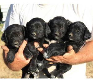 REGALO cuccioli meticci PRENOTA SUBITO IL TUO!