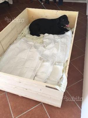 Cassa parto posot class for Cassa parto per cani usata