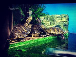 Laghetto per tartarughe posot class for Vaschette tartarughe