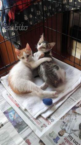 Gattini in adozione