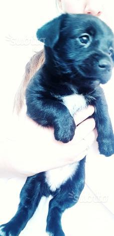 Regalo cucciola di 2 mesi
