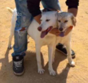 cani da caccia grossa