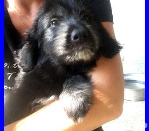 MARGOT cucciola 3 mesi rimasta sola in canile